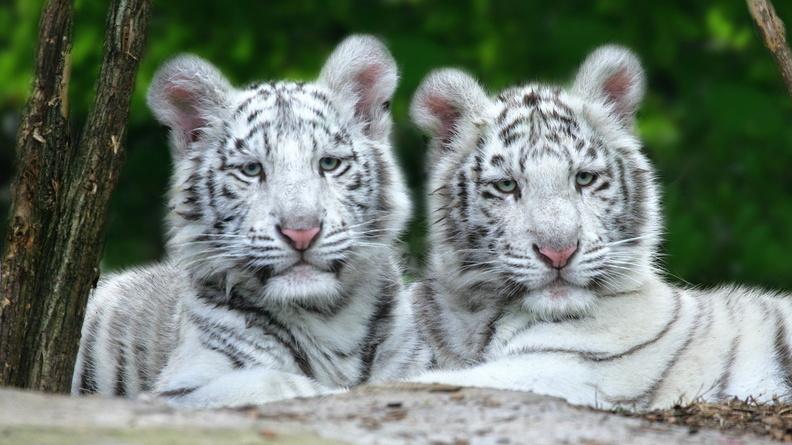 Animaux 11 fonds ecran for Fond ecran gratuit animaux