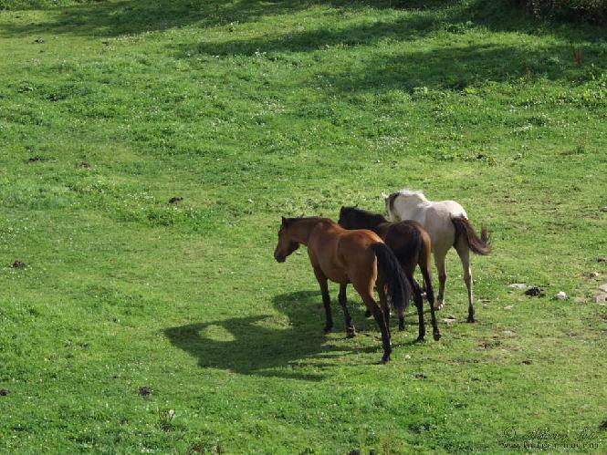 Animaux chevaux 3 fonds ecran - Chevaux gratuits ...