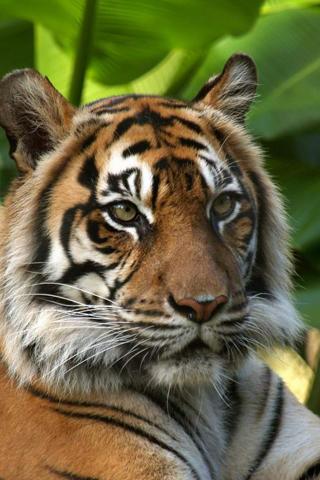 Animaux iphone 15 fonds for Fond ecran gratuit animaux